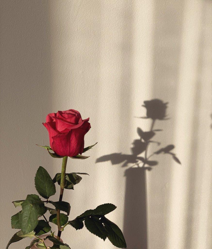 çiçek10 (2).jpg
