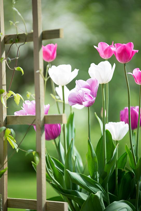 çiçek1b.jpg