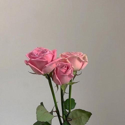 haftalık çiçek (1).jpg