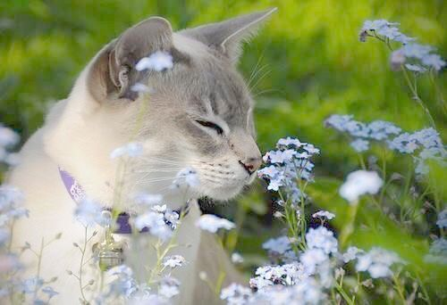haftalık çiçekli (5).jpg