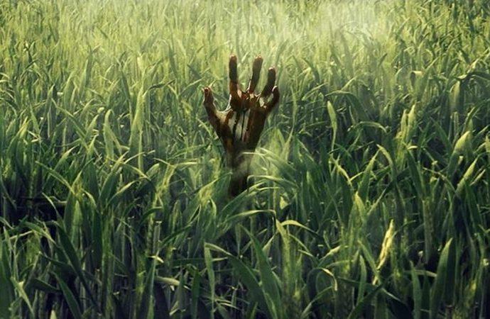 in the tallgrass jpg - Netflix'teki En İyi 20 Korku Filmini Seçtik