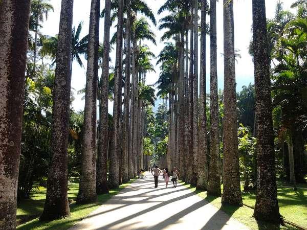 Jardim Botânico.jpg
