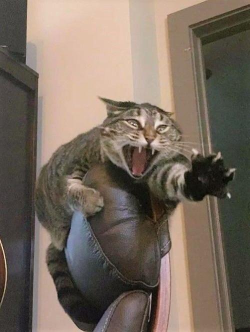 kedi (1).jpg