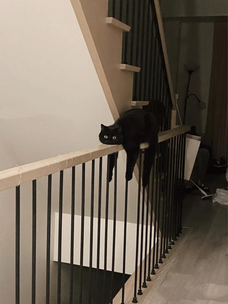 kedi (12).jpg