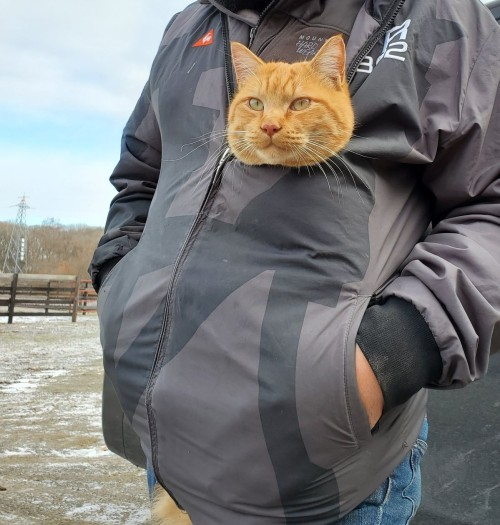 kedi (17).jpg