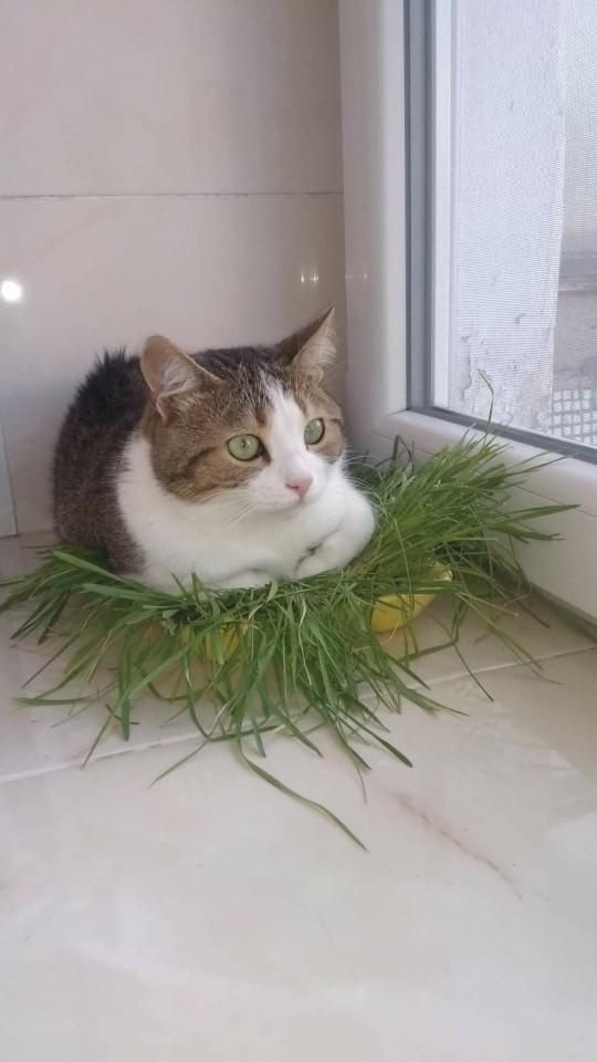 kedi (18).jpg