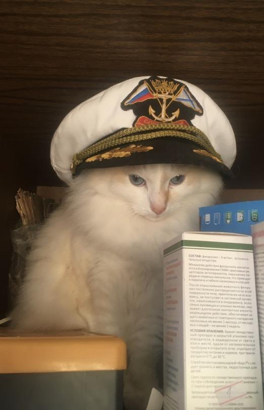 kedi (21).jpg