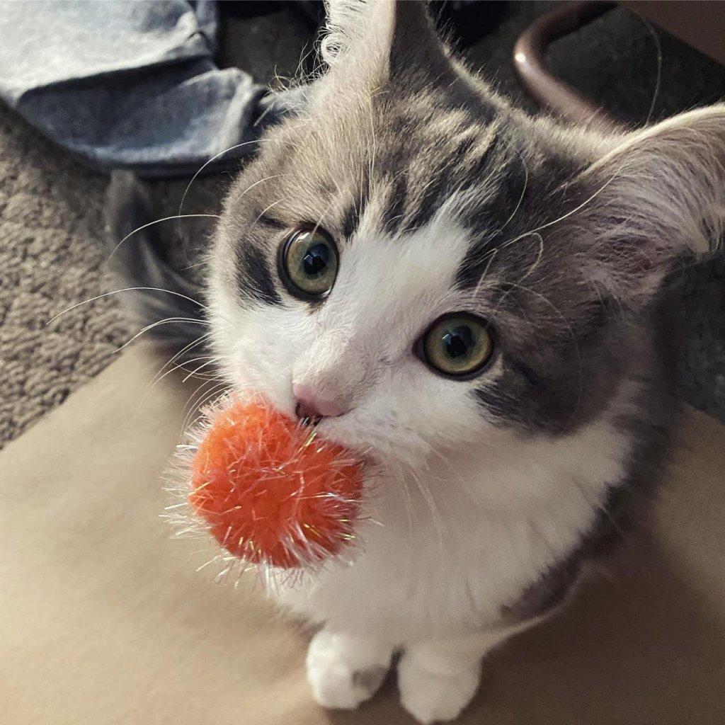kedi (7).jpg