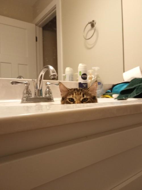 kedi (8).jpg