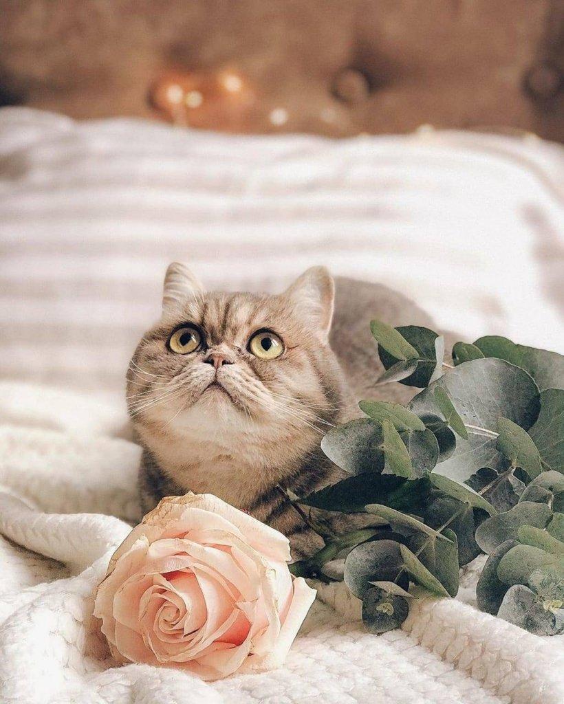kk cat1.jpg
