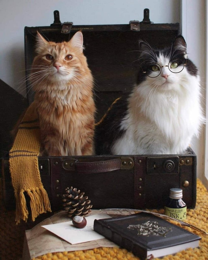 kk cat1c.jpg