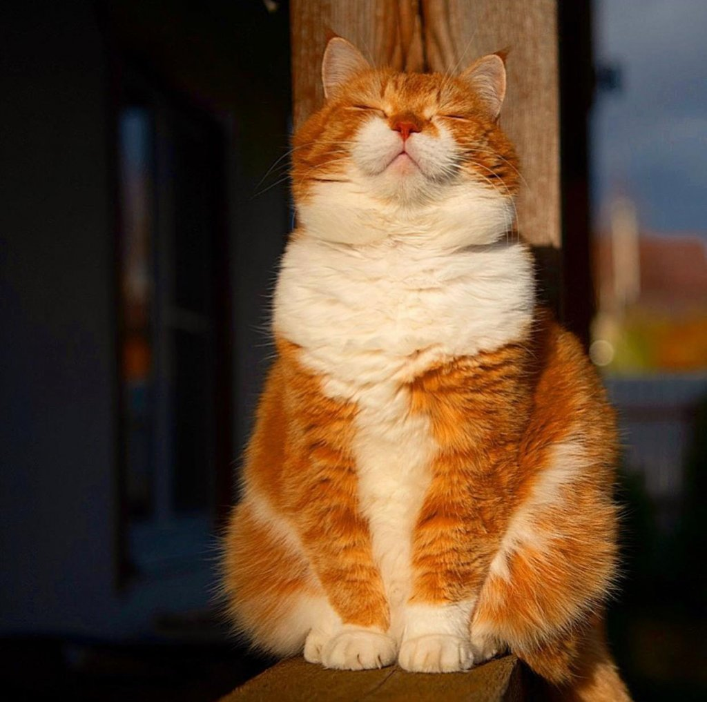 kk cat5.jpeg