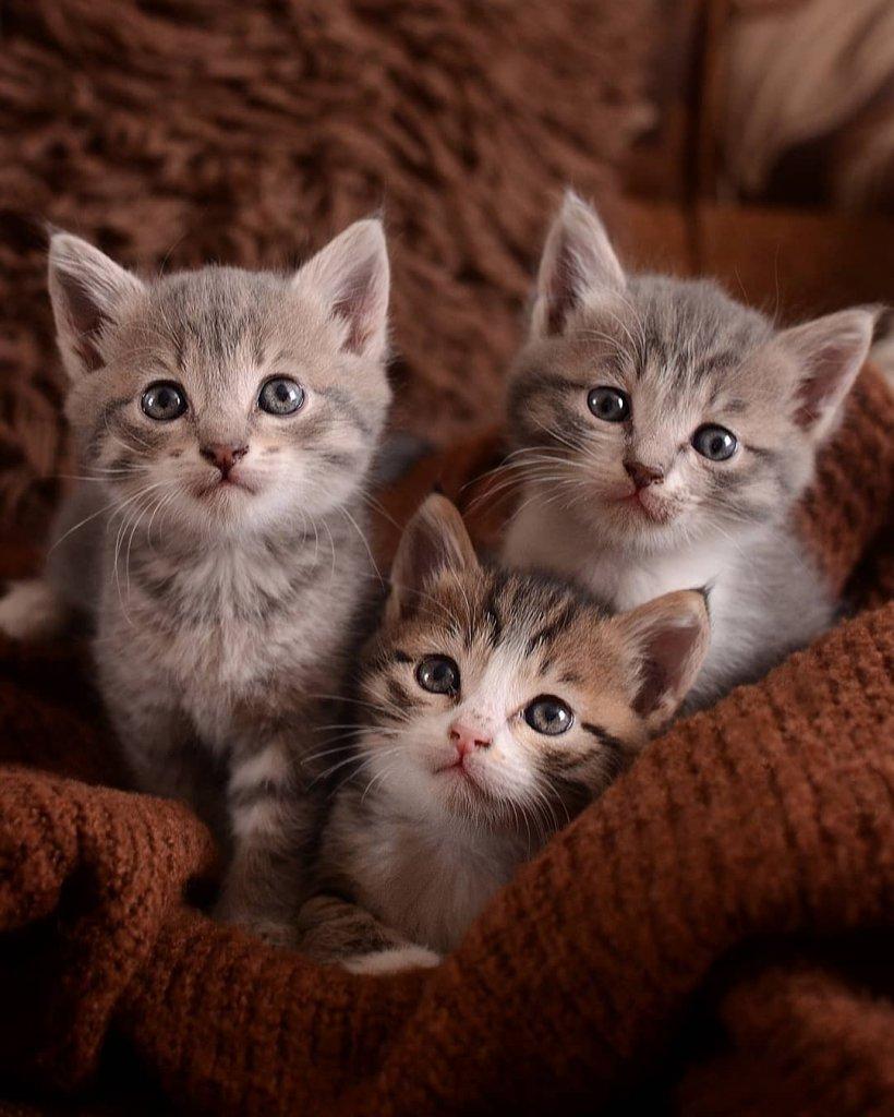 kk cat56.jpg