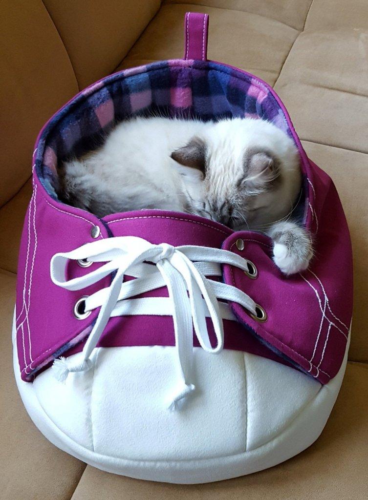 kk kedi (19).jpg