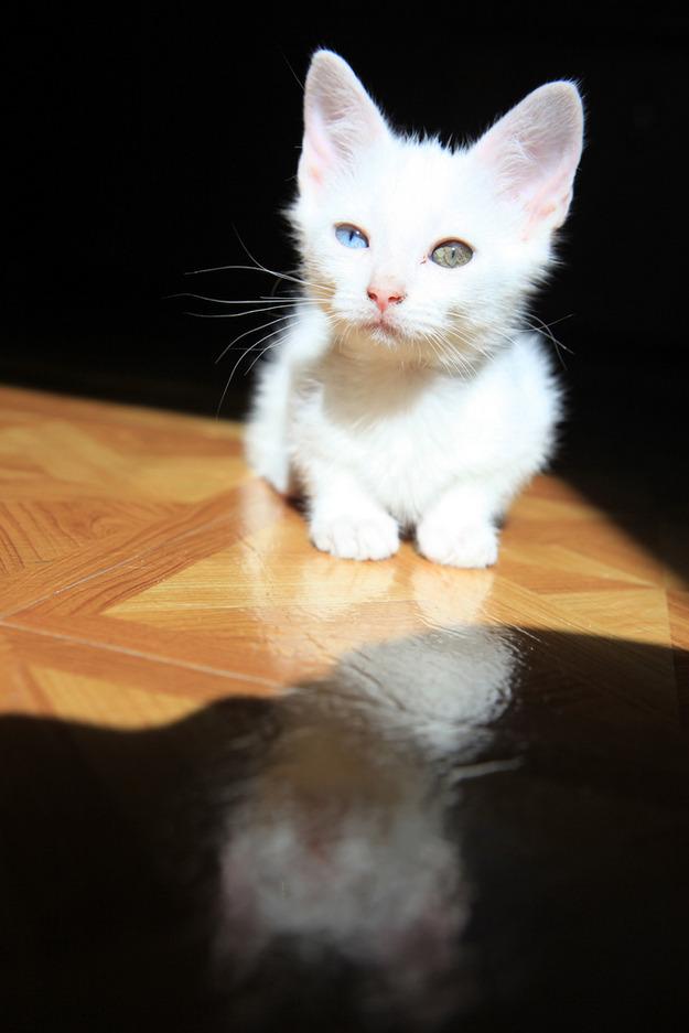 kk kedi (26).jpg