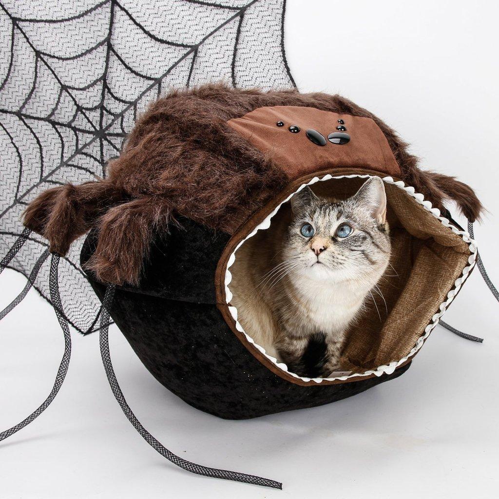 kk kedi (28).jpg