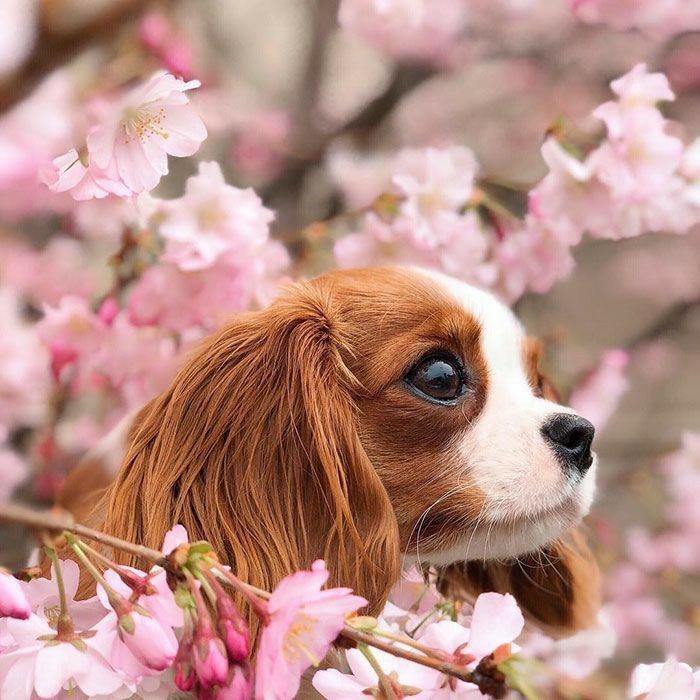 kkdog (2).jpg