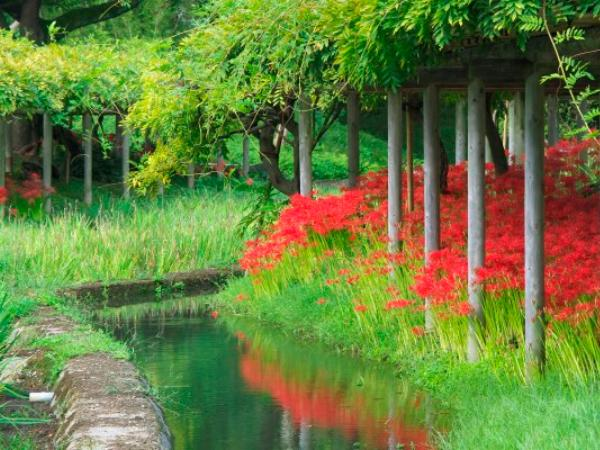 koishikawa-korakuen-gardens.jpg