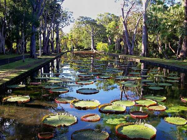 sir-seewoosagur-ramgoolam-botanical-garden.jpg