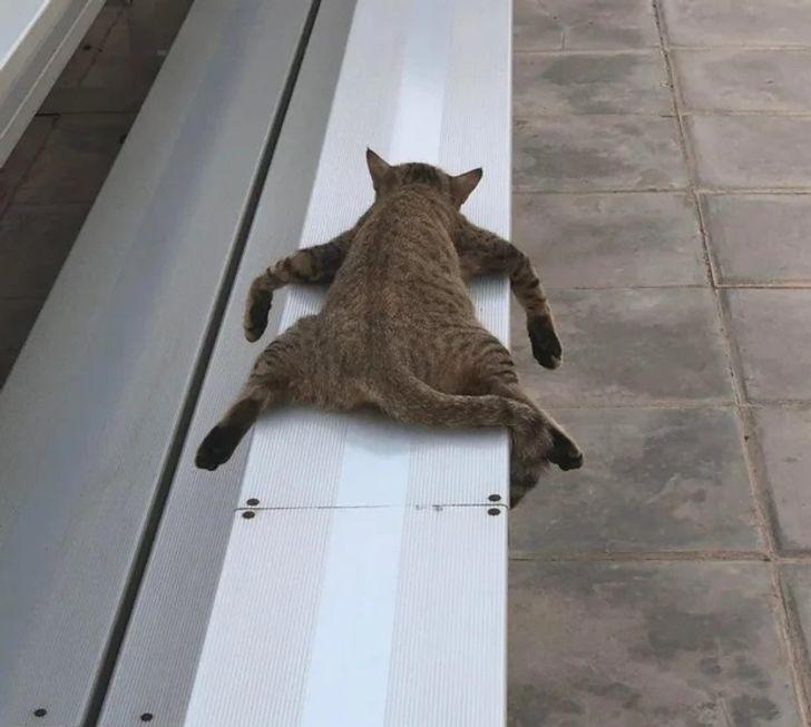 uyuyan_sekerleme_yapan_hayvanlar (3).jpg