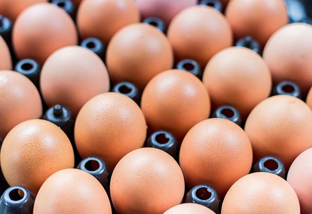 yumurta_diyet_listesi.Jpeg