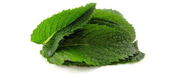 Nane yaprağı mideye iyi geliyor
