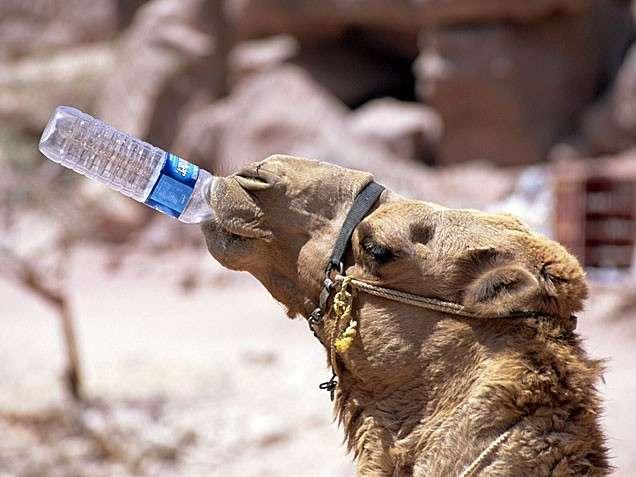 Metabolizma hızlandırmak için soğuk su