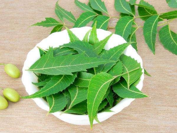 neem yaprağı