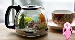 Çaydanlık terrarium yapılışı...