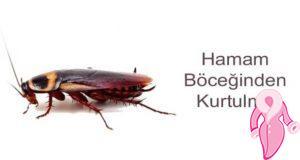 Hamam böceğinden kurtulma yolları