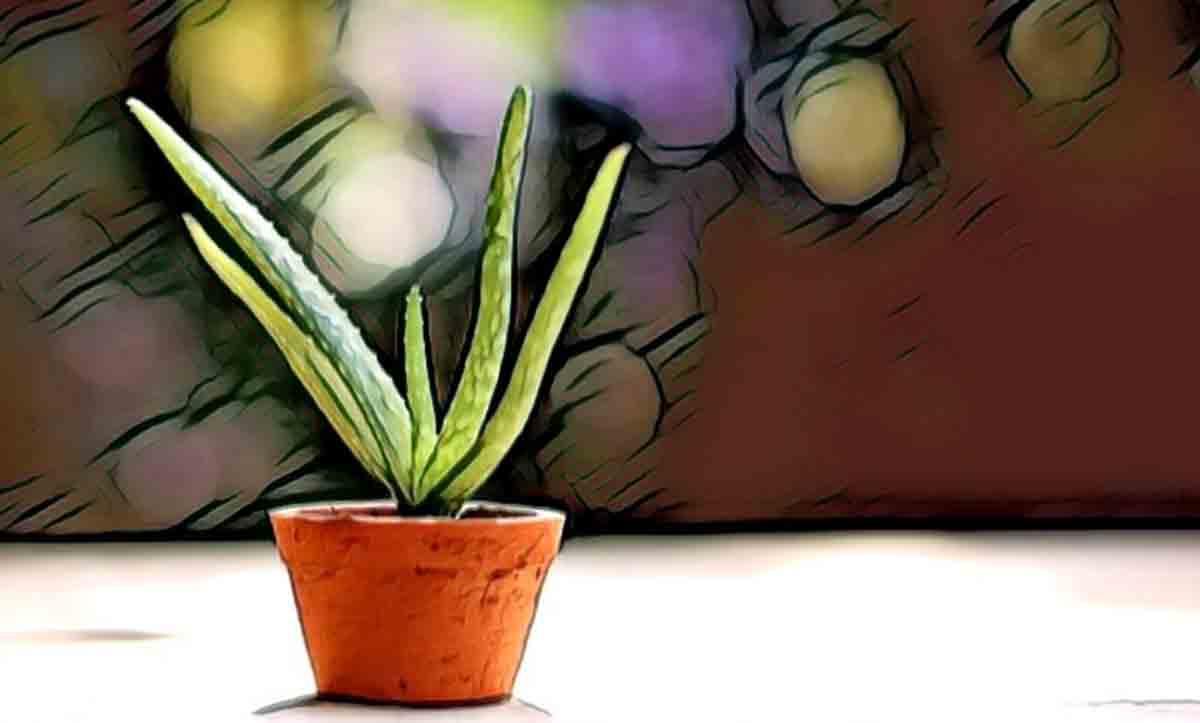 Aloe Vera Jeli'nin Saç ve Cilt Üzerindeki Faydaları