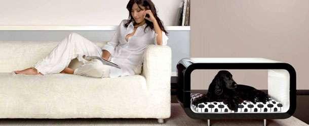 Evcil hayvanlar için ev mobilyaları