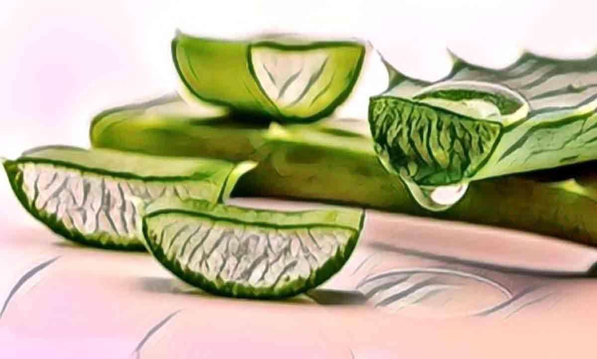 Aloe Vera Sivilce Faydaları
